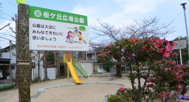 アクセス抜群でとにかく広い「桜ヶ丘広場公園」